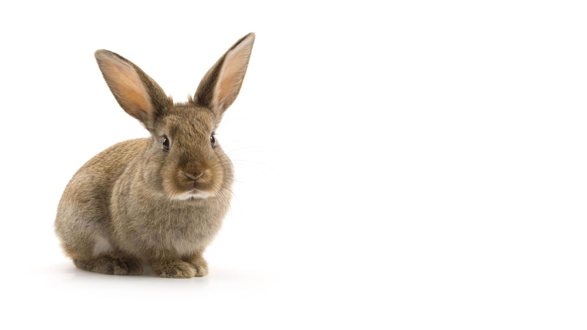Photo d'un lapin